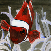 Anemon_fish_card