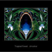 734596-1-tropical-forest_card