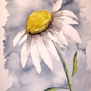 Daisy_small_card