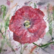 Poppy_burst_email_card