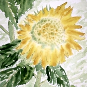 Lone_sunflower_small_card