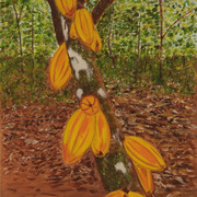 Cocoa-plantation_card