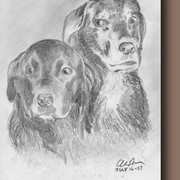 Nancys_dogs_card