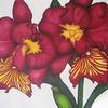 Maroonorchid_thumb