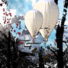 Balloon_forest_thumb