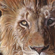 A-lion-face-11x14-0509_card
