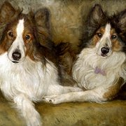 Ca_for_website__shelties___chelson_card