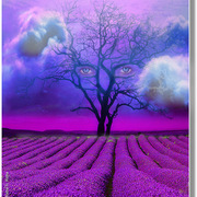 Lavender_field__card