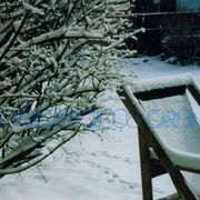 Winter_yard_copynamecr8n_card