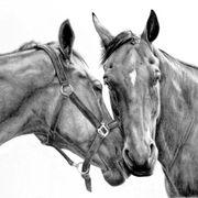 Horse_drawing_005_card