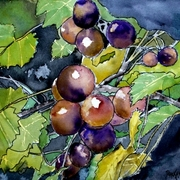 Grape_vine_fruit_painting_card
