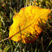 Autumn_47_cl_square