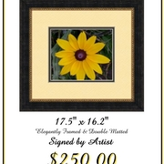 Black_eyed_susan_one_card