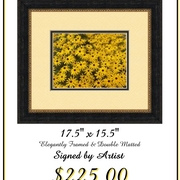 Black_eyed_susans_card