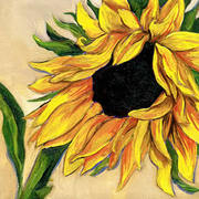 Sunflower_2_card