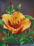 Orange Hibiscus by Rhea Saint