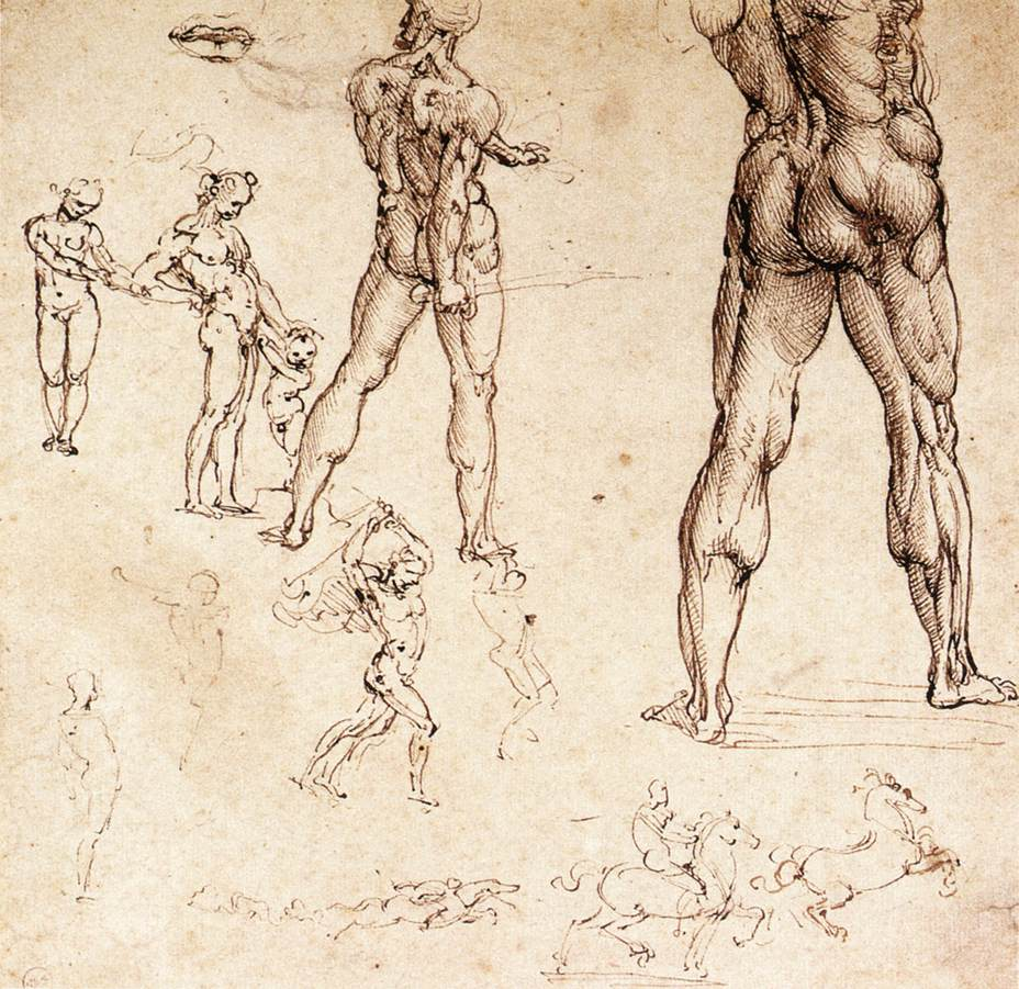 Anatomical studies - Leonardo