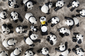 Pandas are all around