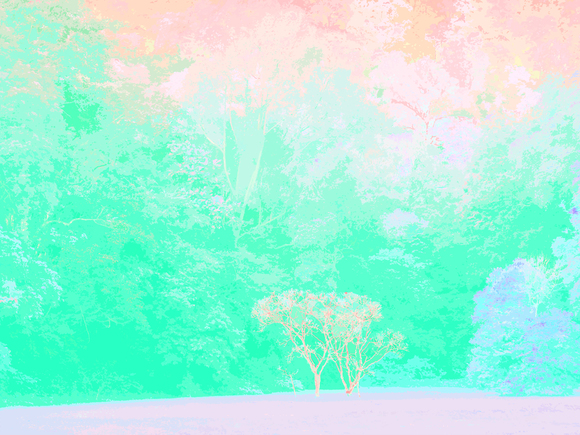 GHOST TREES, 120 X 160 CM