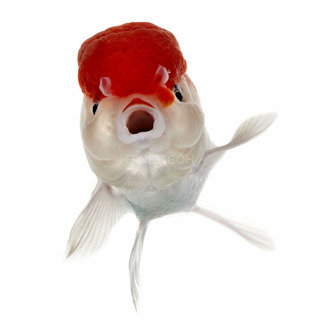 Fish Face 005