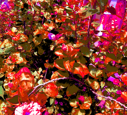 KEK LOK SI GUARDIAN OF HIBISCUS FLOWER, 160 x 120 cm