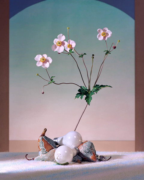 Flowers  pears and bulbs