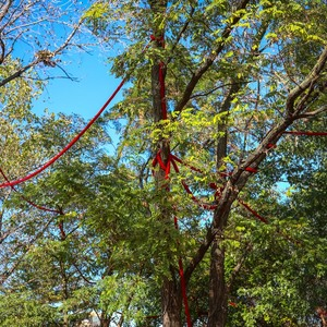 Salazar accessgrovesoftstand 04 photobyscottlynch