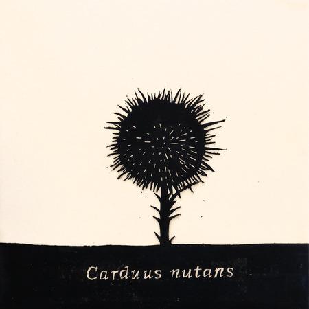 Carduus_nutans