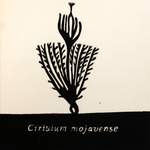 Cirsium_mojavense