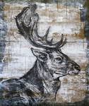 Elk_portrait_i