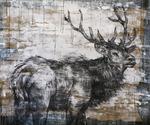 Elk_portrait_ii