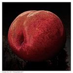 Forbidden-plum-_511