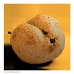 Pear-_1080