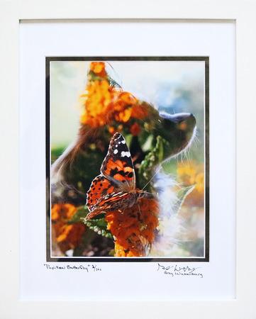 Papillon_butterfly