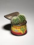 Fresh_cactus