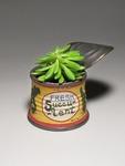 Fresh_succulent