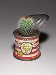 Kaaz's_fresh_cactus