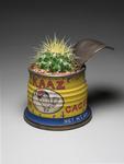 Fresh_kaaz_cactus