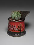 Kaaz's_fresh_cactus_red