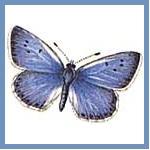 Silver Butterflies logo