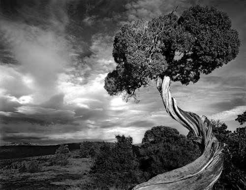 Brice Harbert Photography