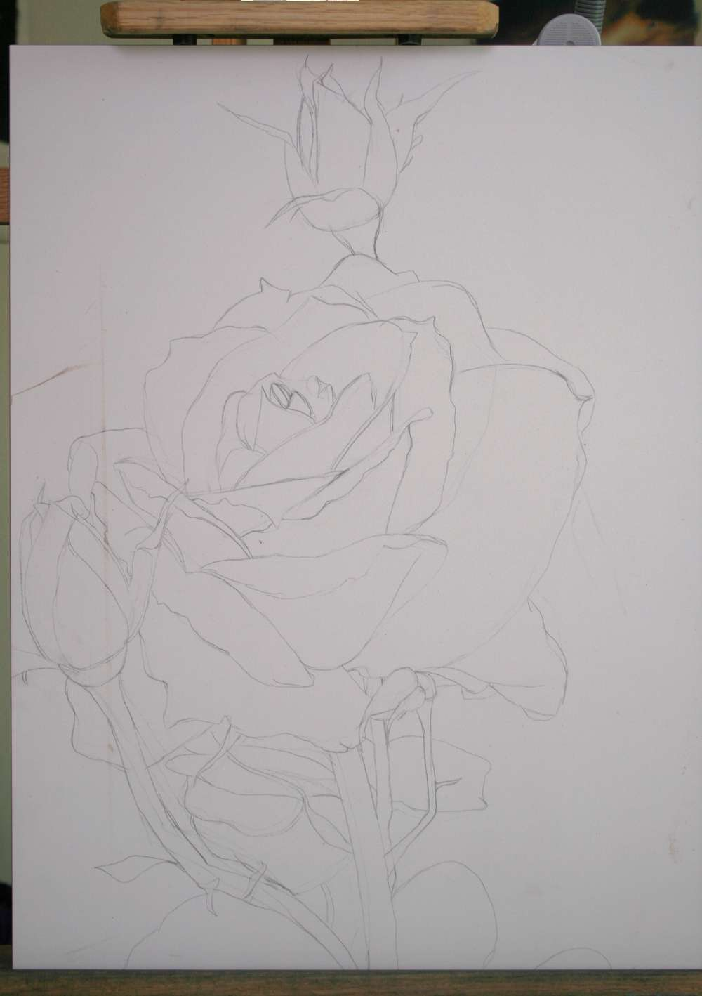 Drawing of 1 rose 2 buds