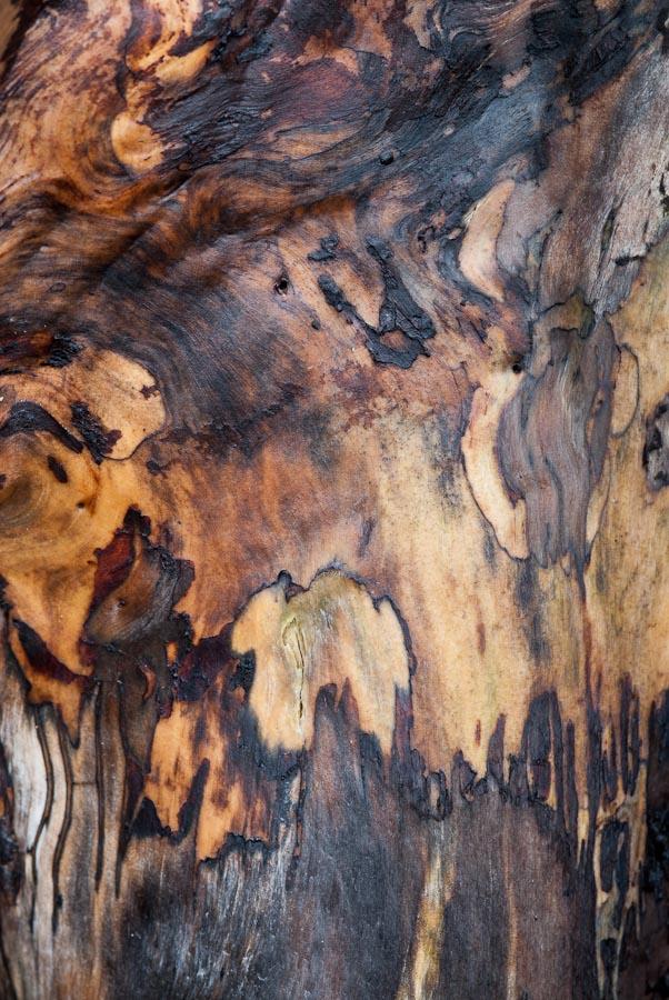 Deadwood 6, Juneau, Alaska