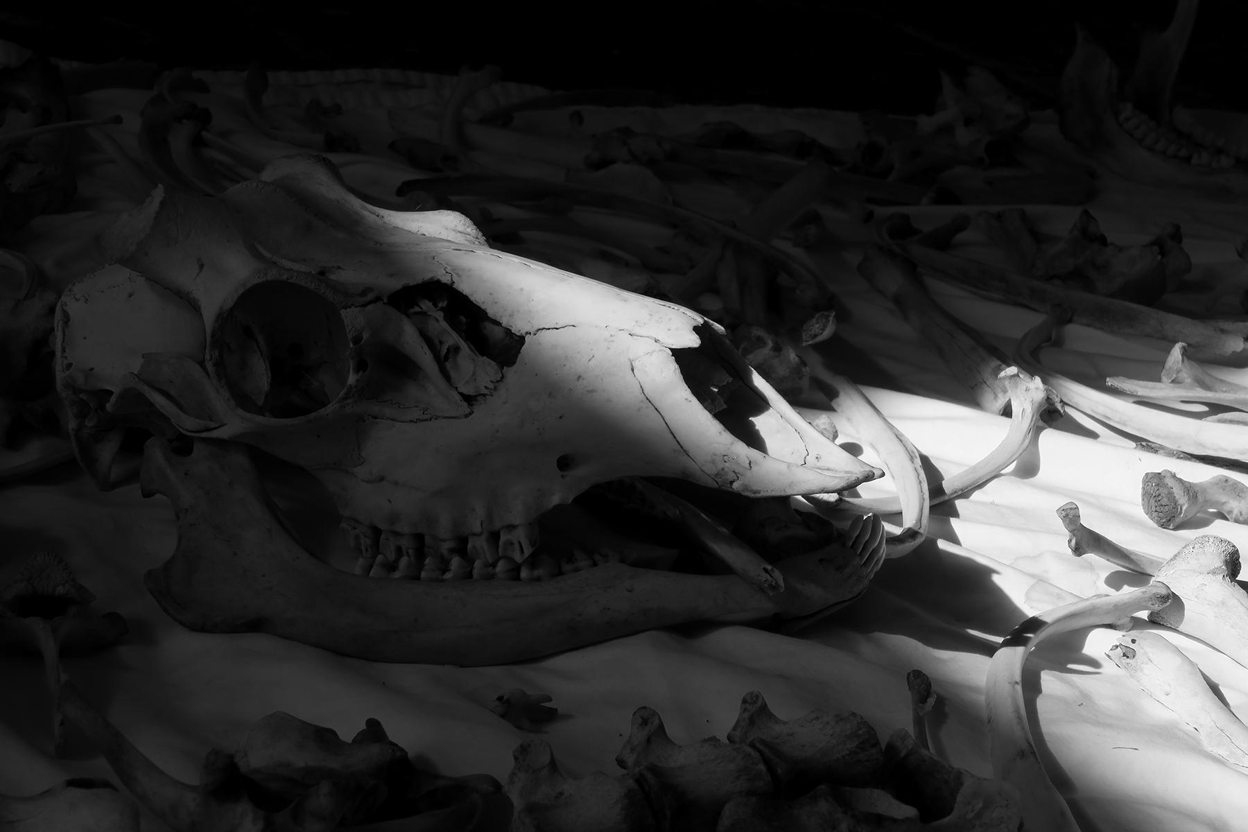 Skull and Bones 6, 2019 Venice Biennale, Kathryn Hart