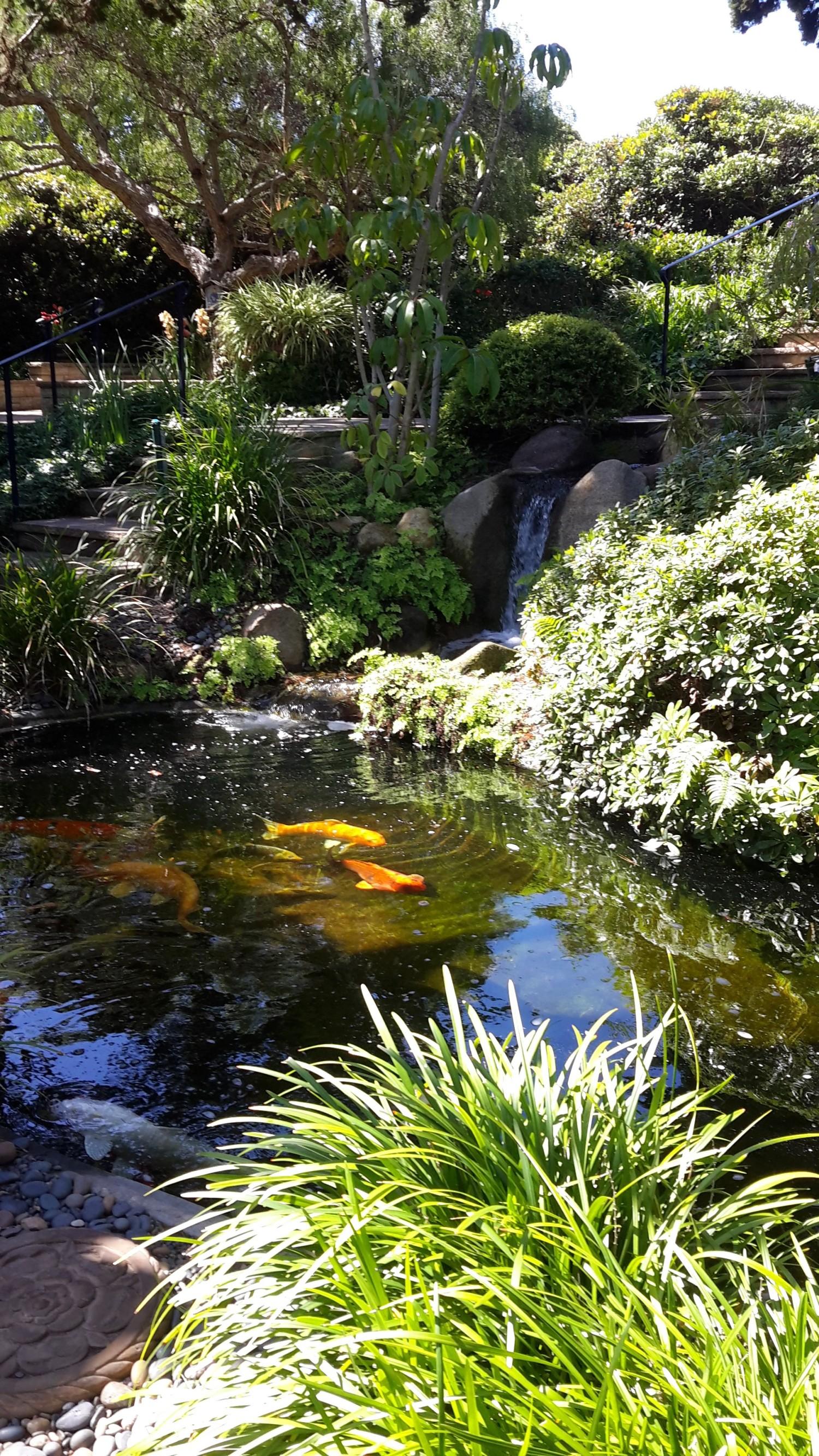 Patience older blog posts for Koi pool garden centre