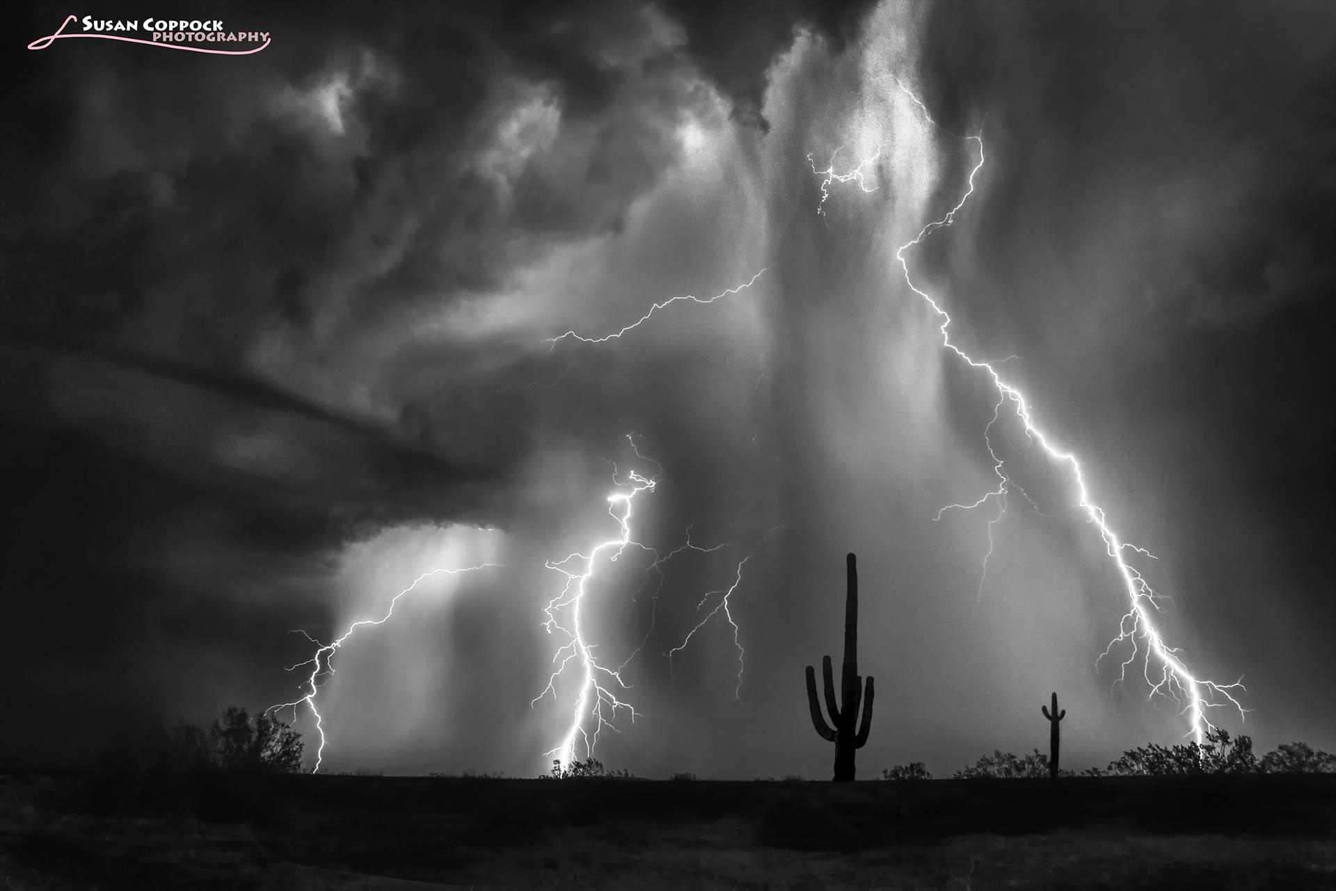 Quartzsite Saguaro