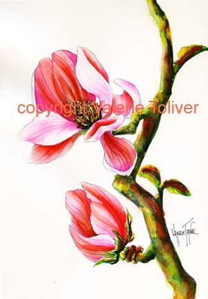 Pink Magnolia Watercolor Painting by Valerie Toliver