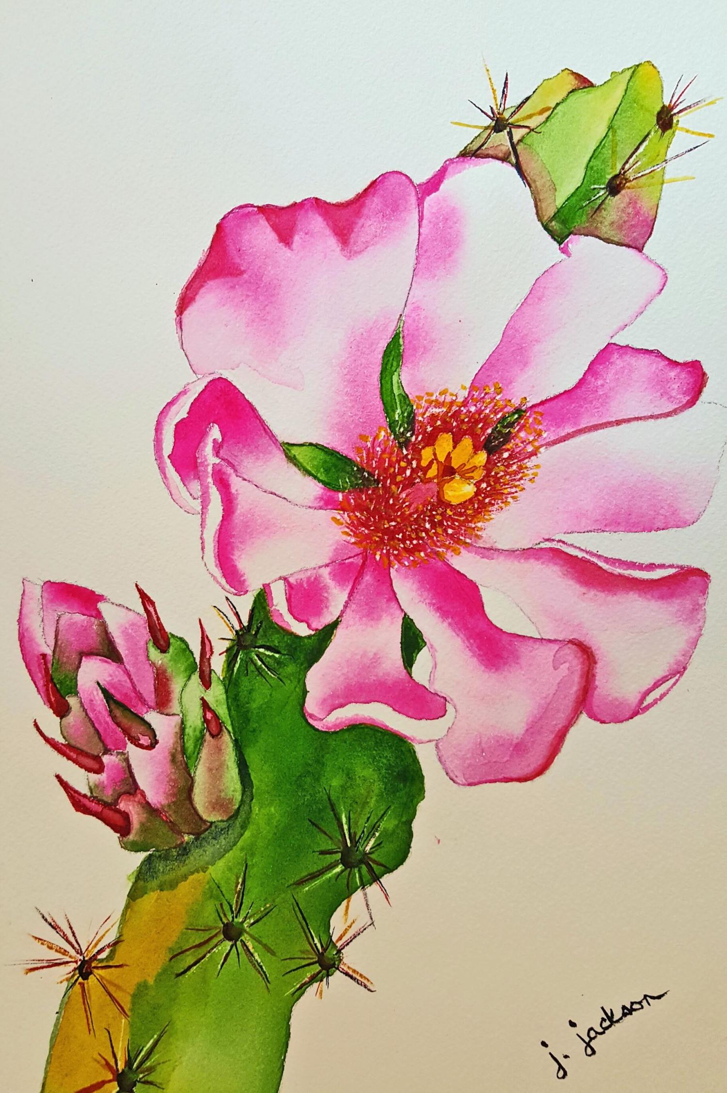 Walking Stick Cactus by Jane J.