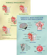 Laminated Speech and Swallowing Diagram