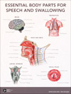 Essential Body Parts for Speech and Swallowing Poster